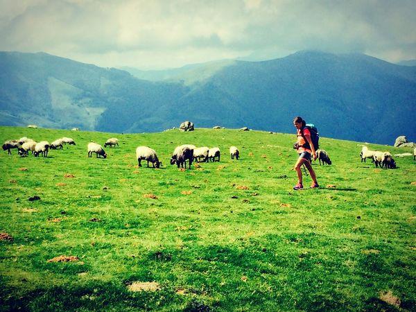 Mountains BuenCamino Buendia CaminodeSantiago Caminofrances Obejas Good Day Green Caminata Verde Friends Sheep Rebaño PrimerDia Saintjamespieddeport