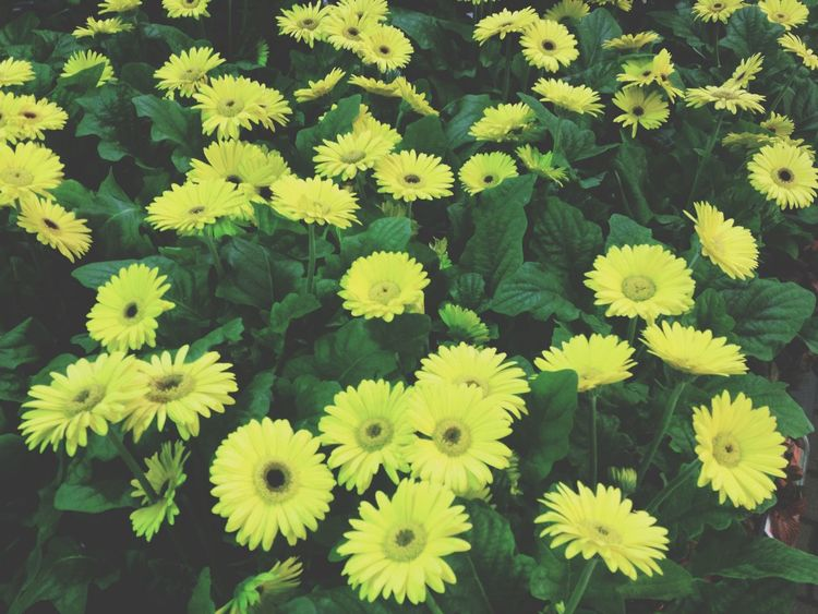 Flowers Yellow Cute Hello World
