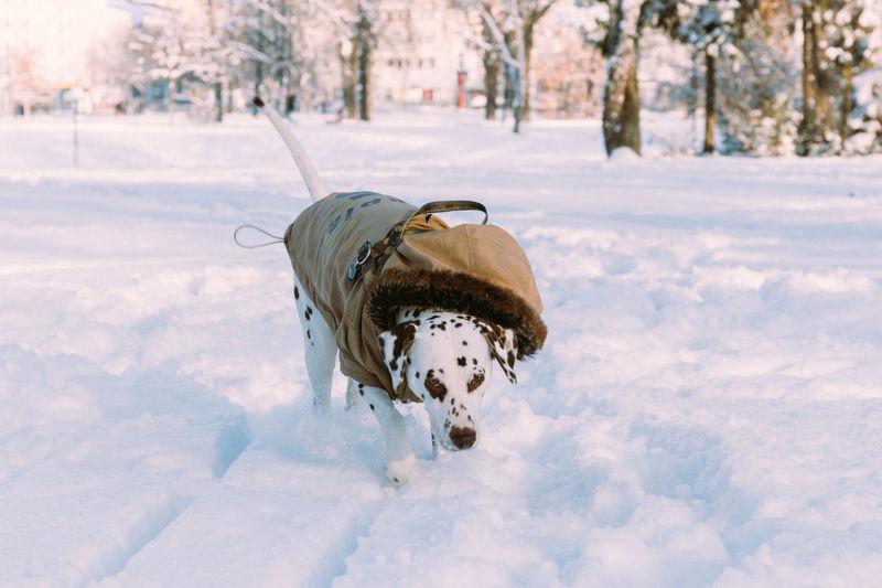 Winter Dogtime Dog I Love My Dog Pet Clothes