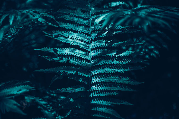 Beautiful green dark fern leaves in forest.  beauty in nature.