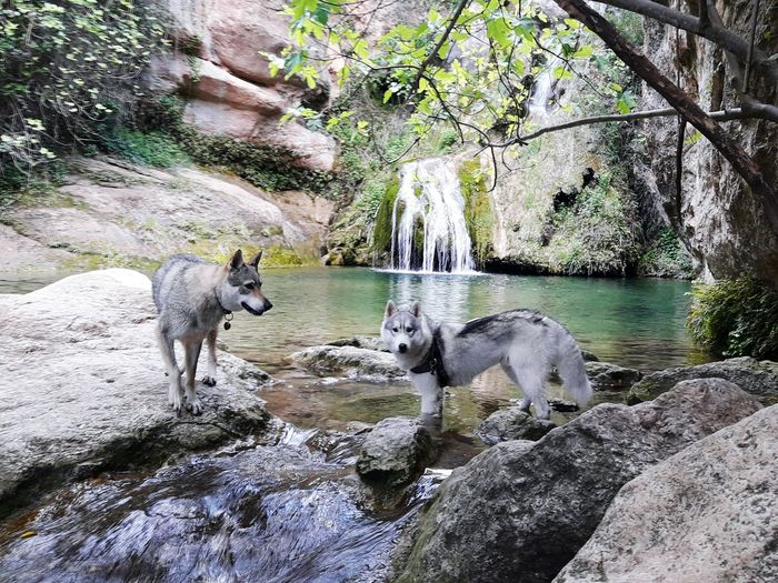 Animal Themes Nature Water Nature_collection EyeEm Nature Lover Forest Mountain Hello World Colours Live, Love, Laugh Relaxing