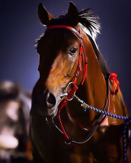 Horses Hello World Check This Out Taking Photos Hanging Out ابوظبي_الامارات Beautiful