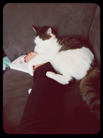 Beaucoup d'amour ❤️ Chat Love Hug
