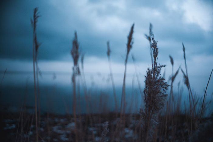 Wer Wind sät Preset Blue Sea Blue Sky Canon5dmk2 AdobeLightroom Adobe Canonphotography Analoglens 28mm Growth Nature Tranquility Sky Plant Cloud - Sky No People Tranquil Scene Beauty In Nature Outdoors Day Focus On Foreground Cattail Scenics Close-up