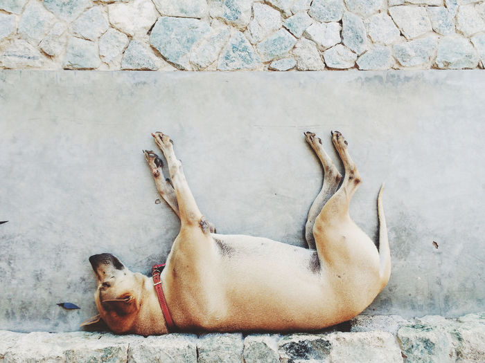 Animal Themes Day Dog Domestic Animals Full Length High Angle View Lying Down Mammal No People One Animal Outdoors Pets Relaxation Resting Sleeping Street Togetherness Two Animals Wall - Building Feature Zoology