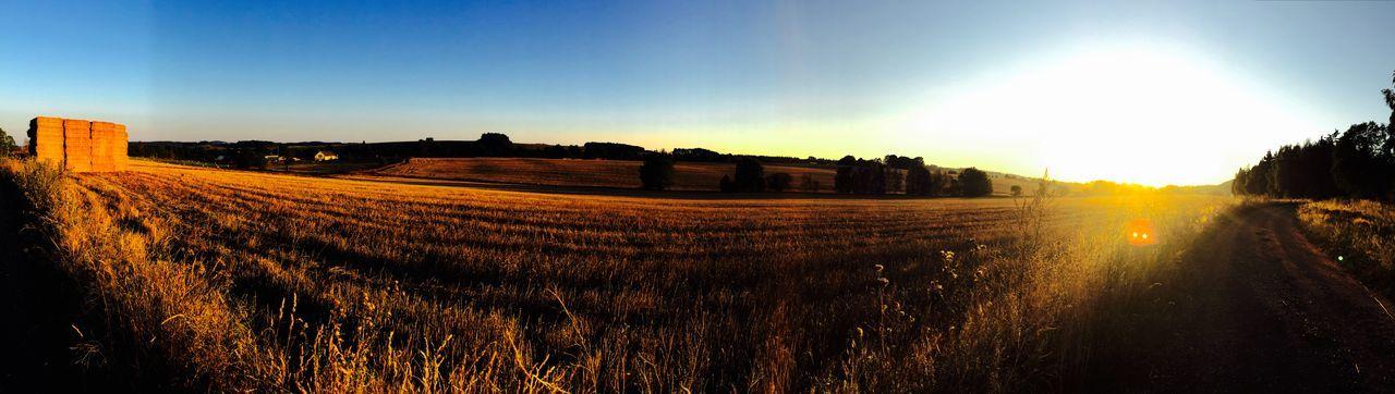 Meadow Czech
