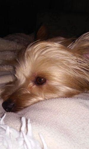 My Quinn puppy. Love him😀😀 Cute Pets