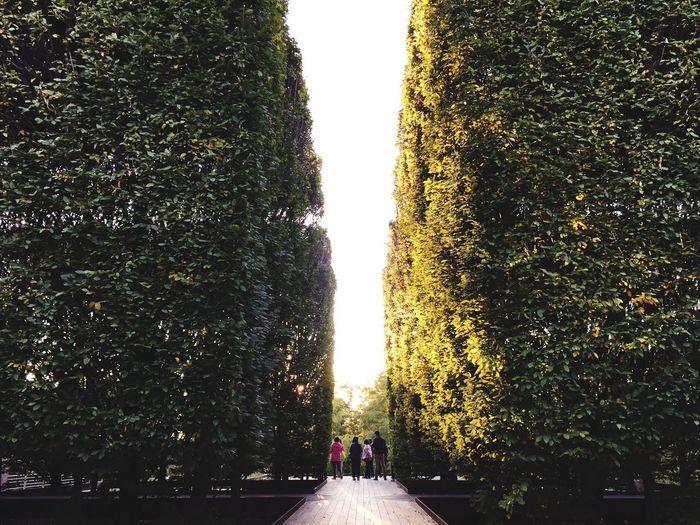 Maze Urban Garden Forest Path