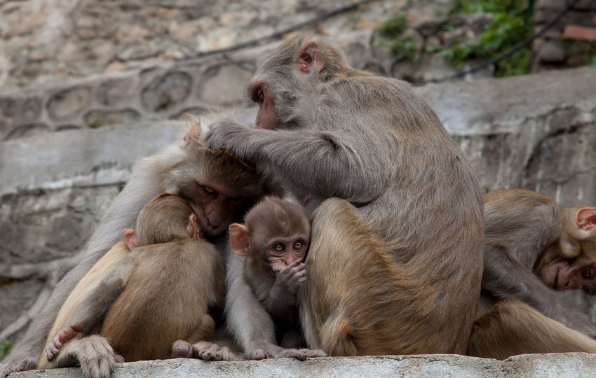 Animal Family Animal Themes Animal Wildlife Animals In The Wild Female Animal Mammal Monkey No People Outdoors Togetherness Travel Destinations Young Animal