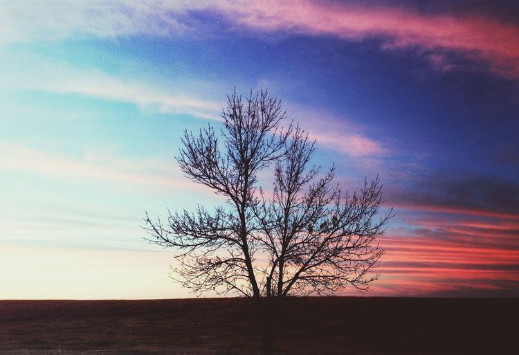 Bare trees on landscape at sunset