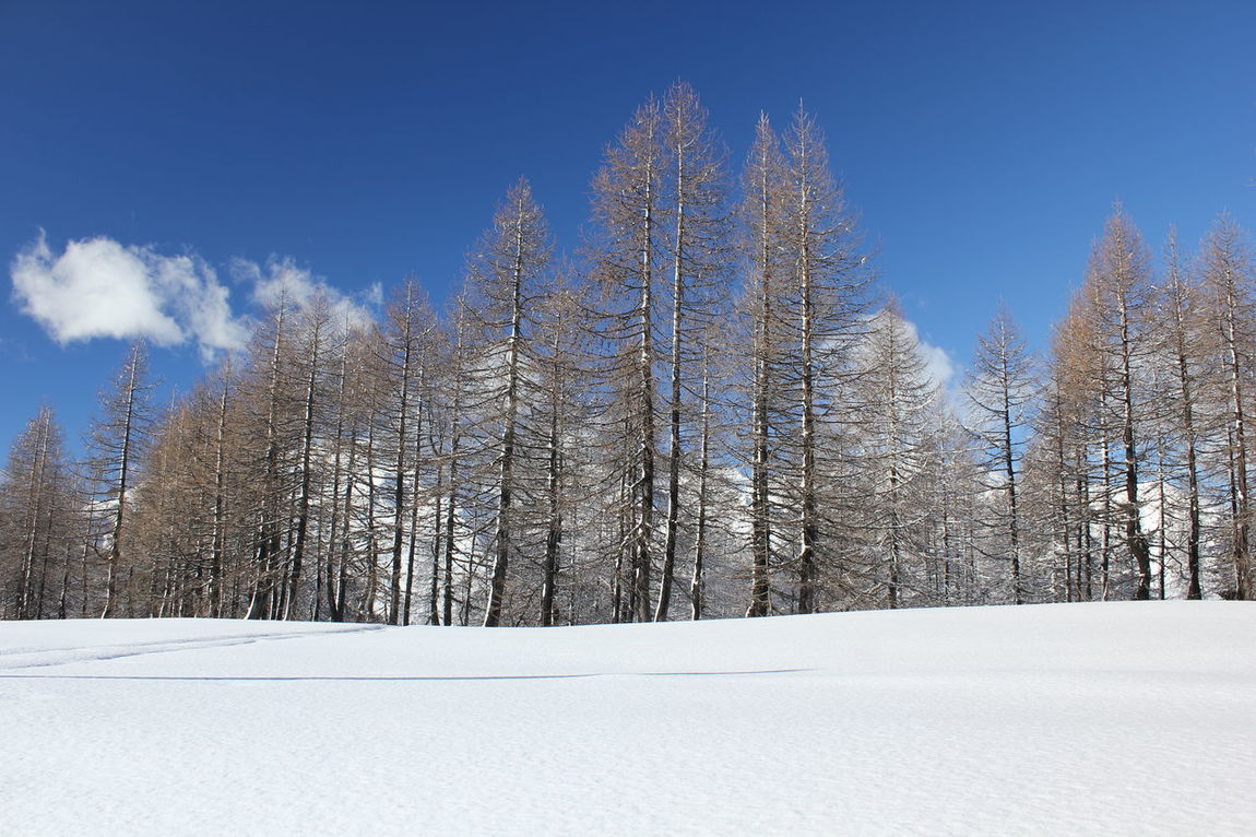 Winter season in Madesimo Madesimo Snow ❄ Sunny Winter Bare Trees Beauty In Nature Blue Sky Cold Temperature Day Italy Landscape Leafless Mountain Nature No People Outdoors Scenics Ski Runs Sky Snow Tranquil Scene Tranquility Winter Shades Of Winter