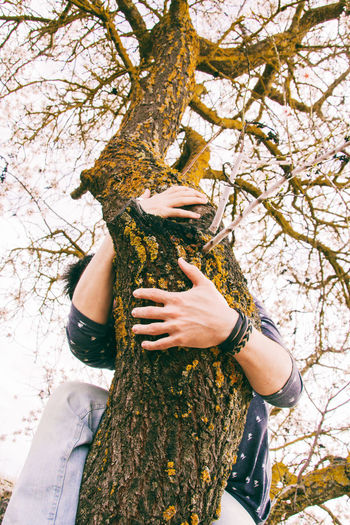 Low angle view of hand holding tree