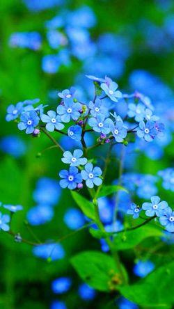 Blue LifeInColor