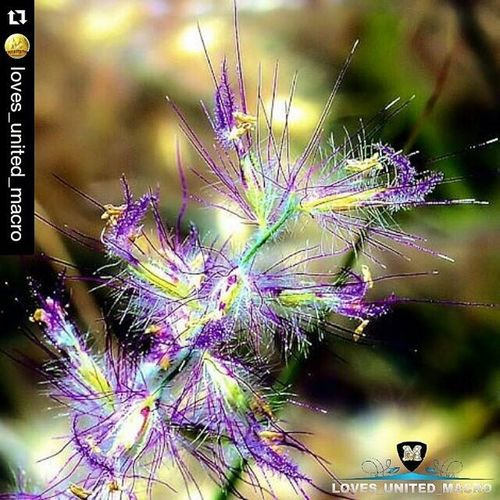 Repost @loves_united_macro with @repostapp ・・・ Present B E S T M A C R O O F T H E D A Y October 8, 2015 CONGRATS TO | @msadikun PROFILE ADMIN | @rosanna2907 OUR TAG | Loves_united_macro THANK FOR FOLLOWS US | @LOVES_UNITED_MACRO PARTNERS GROUP | @LOVES_united_TEAM @Loves_Flowers_ @LOVES_united_NATURE MEMBERS | @Loves_Crew __________________________________ Simpley_perfection Alalamiya_macro Bns_macro Fotofanatics_macro_ Tgif_macro Rsa_macro Macroparadise Ig_naturegallery Ig_macro Heart_imprint_vip Flair_main Art_camera Brmacro Delightfulnature Loves_team_Italy