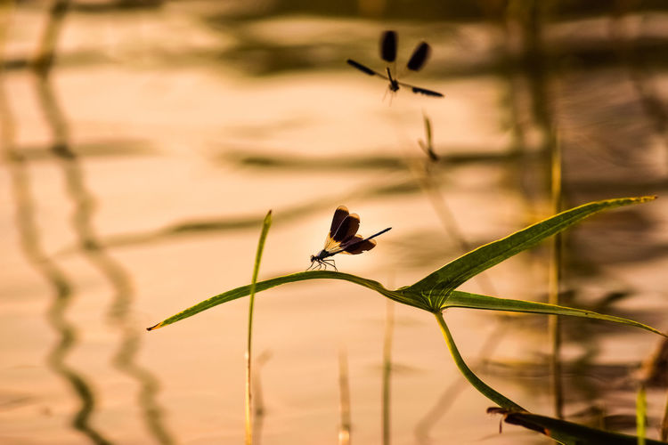 Animal Wildlife Dragonfly One Animal Animals In The Wild Animal Themes No People Close-up Nature Outdoors Beauty In Nature Dragonfly Water Water Reflections Leaves Day Plant