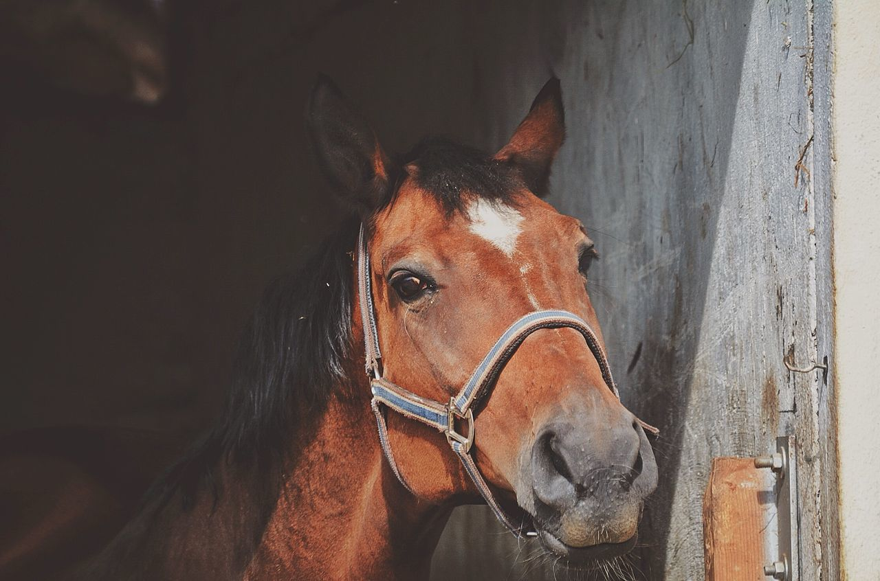 Horse In Shed