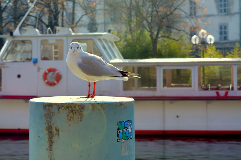 Close-up of seagull perching on metal