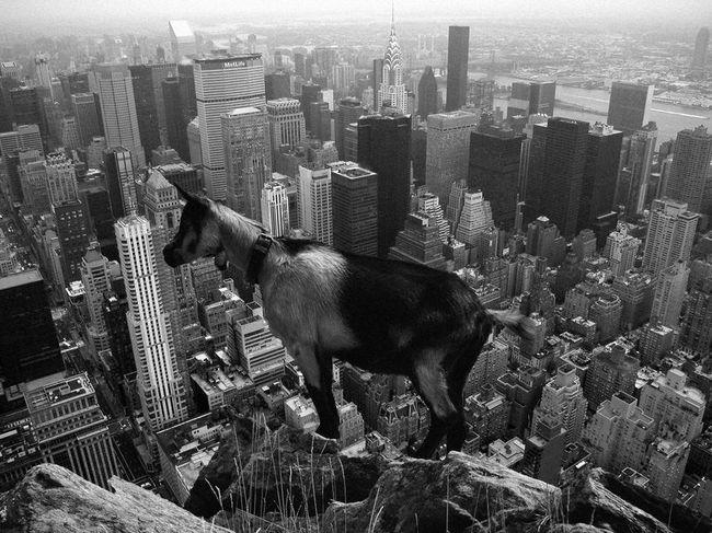 Hello World Taking Photos NYC Photography NYCImpressions Photoshop Photoshop Edit New York Newyork NYC Photo Art
