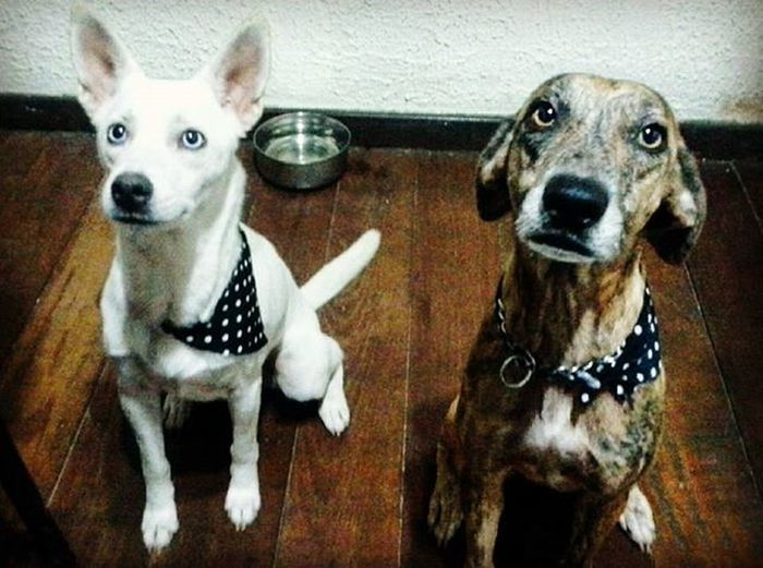 Meus bebês 🐶 Dogs Pets Mylove Cutes Adotarétudodebom Viralatas Cold Rio15graus