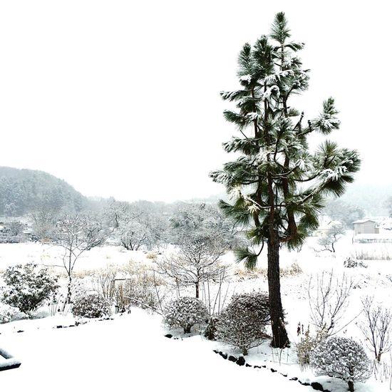 帰省中。一面銀世界です。 OneCam EyeEm Snow Snow Day