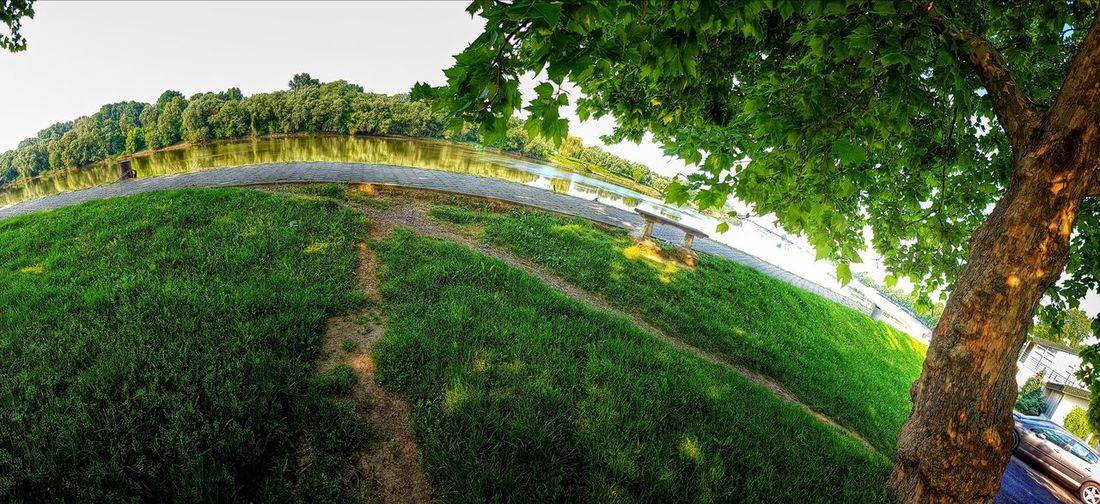 Under The Tree Fisheye Distorsion Croatia Slavonija HDR Slavonski Brod Spring Colours Beautiful Nature Farytale Magic Tree Leaf Sky Green Color Grass Colored Daytime Pretty Vegetation Urban Scenery Green