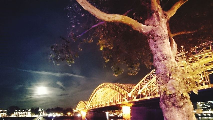Moonlight Bridge Tree