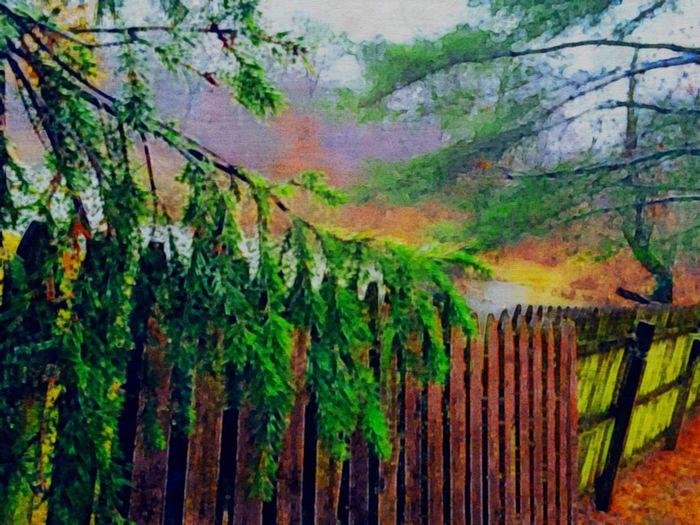 NEM Painterly Trees IPSPaint Depth Of Field IPhoneography IPSLandscape