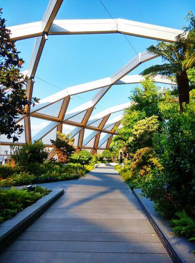 Garden London Open Roof Summer Plants City