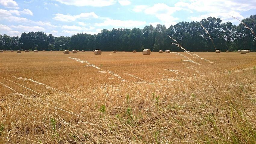 Harvest Time Hay Bales