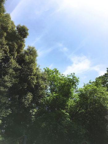 鳥のさえずりを写せないのが残念 Up Close Street Photography Showcase April Everything In Its Place Things I Like Urban Spring Fever Tokyo Nature Green Sky Look Up The Sky Tokyo,Japan