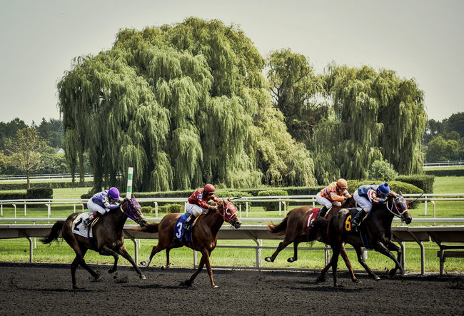Four horses coming down the stretch at a race track. Horse Racecourse Horse Photography  Horse Race Horse Racing Jockeys Horseback Riding Race Track Thoroughbred Thoroughbredracing