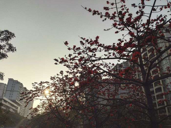 Tree Sun Funny Life . 国际v Good