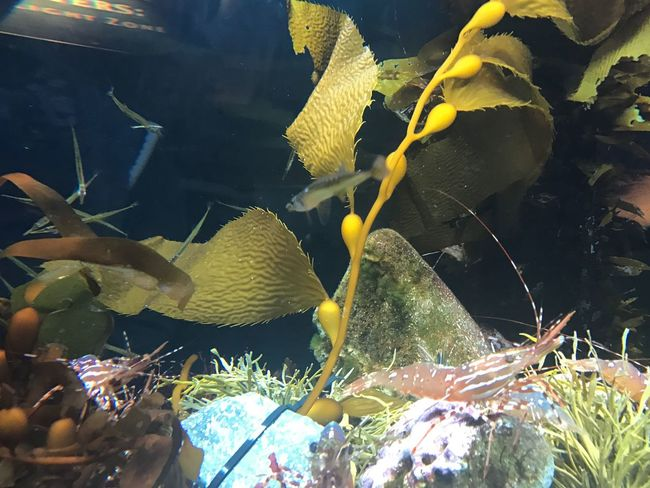 Underwater Plant Water Yellow Leaf No People Nature Close-up Sea Life Beauty In Nature Swimming Animal Themes Aquarium UnderSea Outdoors Day