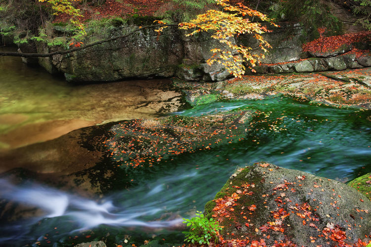Autumn mountain stream on flat rocks in Karkonosze Mountains, Poland Autumn Brook Creek Fall Colors Flowing Stream Flowing Water Karkonoski Park Narodowy Karkonosze Karkonosze Mountains Nature Nature Photography Poland Rock Travel Autum Leaves Beauty In Nature Colorful Europe Fall Flat Rock Idyllic Landscape Leaves Outdoors Stream