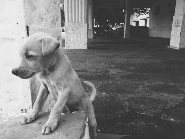 Puppy on street:) Relaxing Nauju XPERIA Mobilephotographer