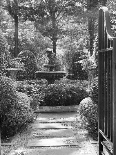 Plants in garden
