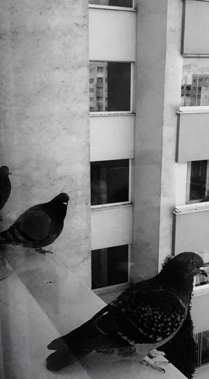 Bird Animal Themes Window No People Building Exterior Animals In The Wild Day Outdoors Adapted To The City