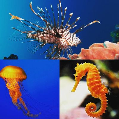 Some of my Favorite Sea Creatures Simplybeingalice I really want a salt water tank