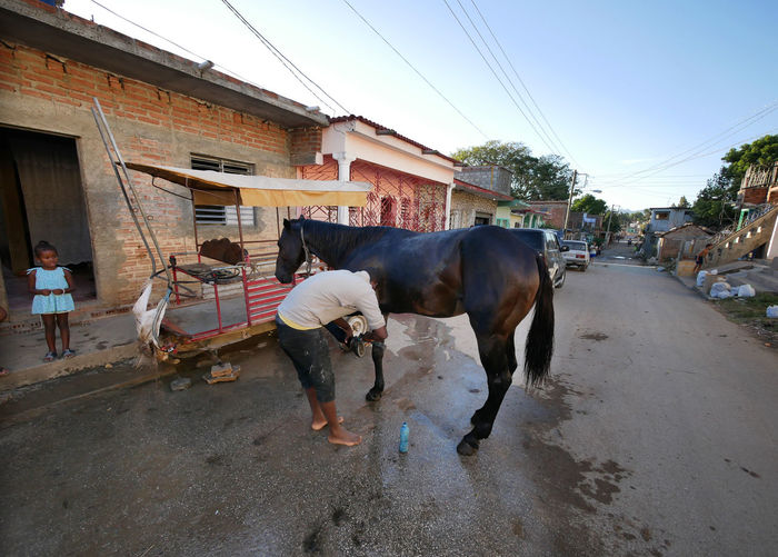 Washing the horse on the streets of Trinidad, Cuba. Adult Adults Only Architecture Building Exterior Built Structure Day Domestic Animals Livestock Mammal Men One Animal One Person Outdoors People Pets Real People Sky Street Working Animal The Street Photographer - 2017 EyeEm Awards