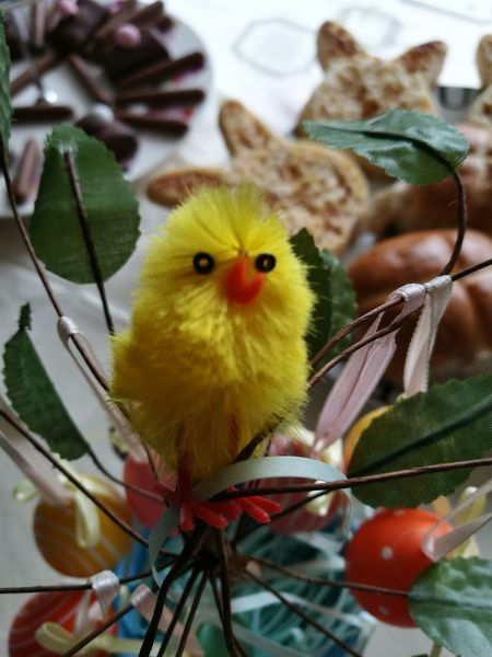 Animal Themes Close-up Easter Easter Chicks Easter Decoration