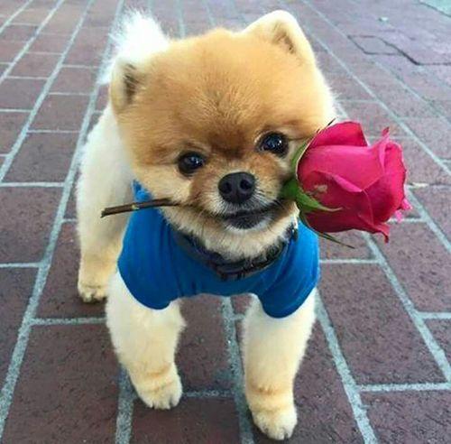 Boa tarde amigos!!!!!