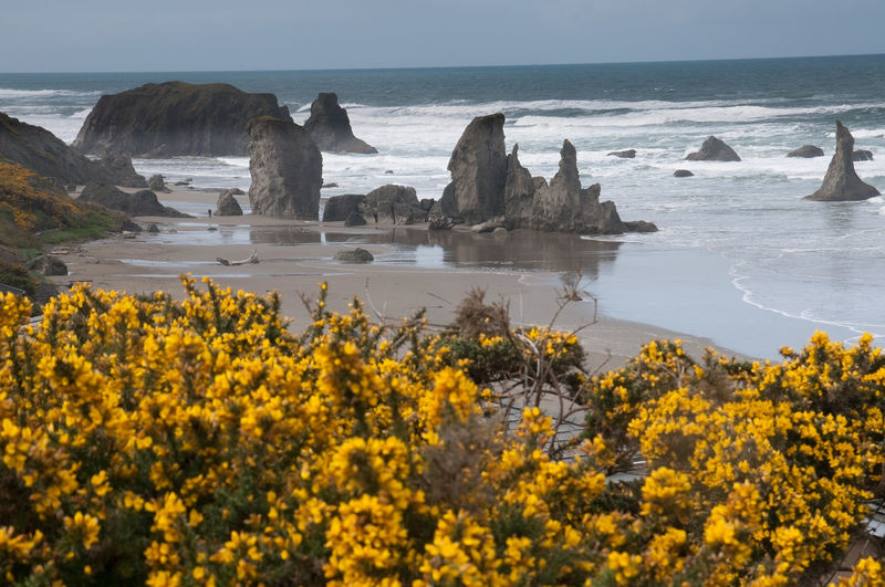The Beauty of The Southern Oregon Coast Beach Beauty In Nature Day Flower Horizon Over Water Nature No People Outdoors Scenics Sea Sky Tranquility Water Wave Yellow First Eyeem Photo The Great Outdoors - 2017 EyeEm Awards Paint The Town Yellow