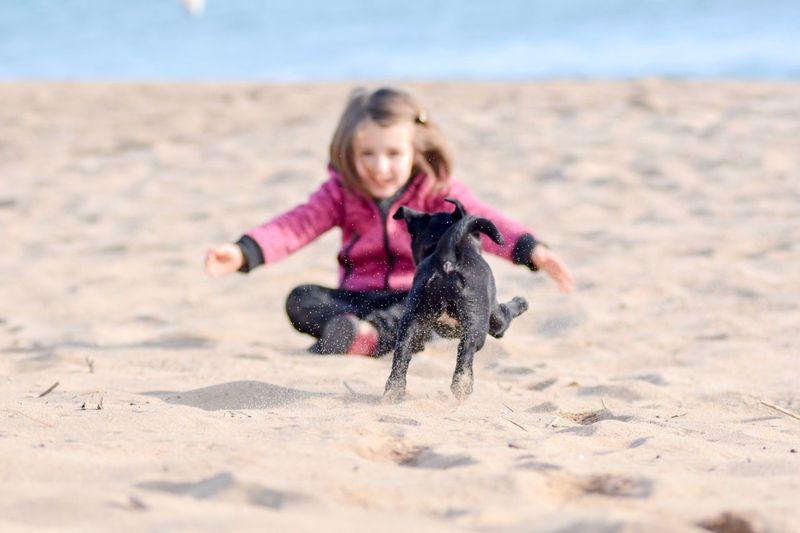 Puppy running towards girl sitting at beach