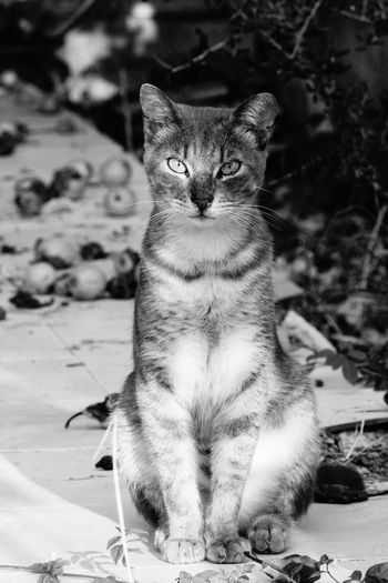 Pets Portrait Sitting Feline Domestic Cat Looking At Camera Close-up Cat Tabby Tabby Cat Pet Bed Ginger Cat Whisker Undomesticated Cat Maine Coon Cat Sleepy Animal Eye Carnivora Stray Animal Cheetah Protruding Leopard At Home Yellow Eyes Kitten EyeEmNewHere