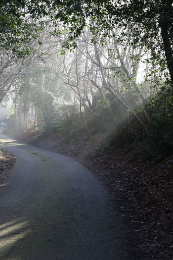 Beauty In Nature Country Lane Day Fog Forest Landscape Nature No People Outdoors Road Scenics Shadow Shafts Of Sunlight Sun Through Trees Surrey Countryside The Way Forward Tree