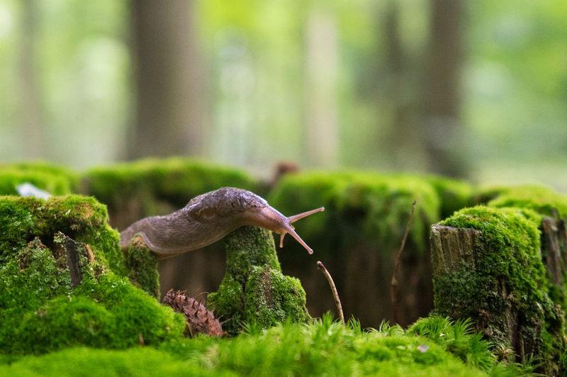 Close-up of slug on moss