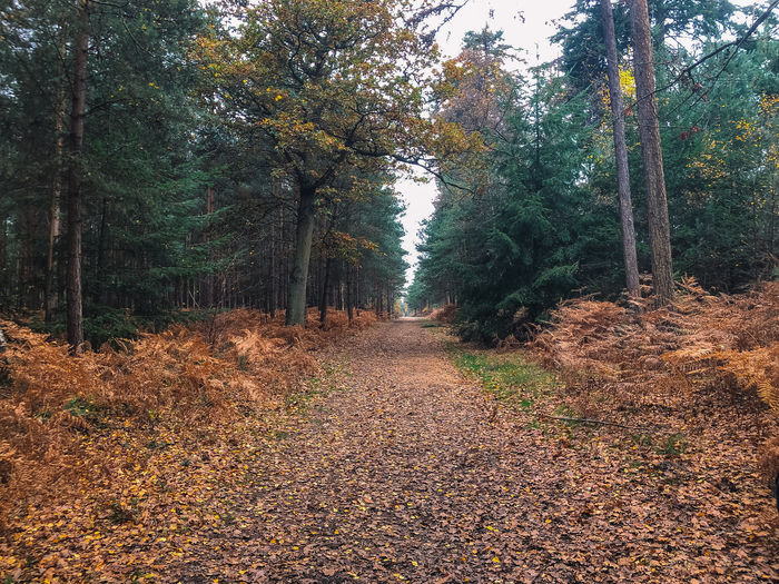 A walk through the colours of autumn Tree Plant Forest The Way Forward Growth Tranquility Direction Beauty In Nature Autumn Land Nature Tranquil Scene Footpath Change Day Non-urban Scene No People Scenics - Nature Road Plant Part WoodLand Outdoors Leaves