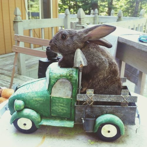 Who doesn't love a cheesy picture of a bunny in a mini truck? Cute Animal Bunny  Rabbit