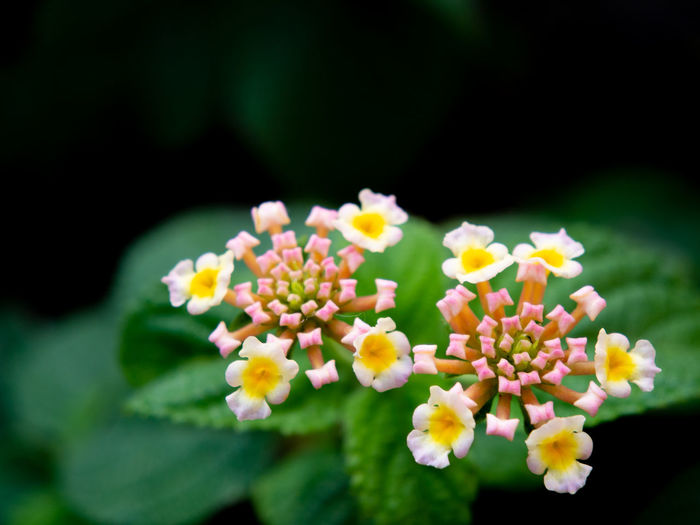 Flower Flowering Plant Plant Beauty In Nature Flower Head Close-up Nature Growth Day No People Outdoors