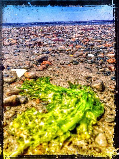 Beach IPSTexture